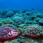 カラカラ先生ダイビング ミービシ東 サンゴ