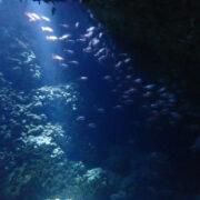 カラカラ先生ダイビング ハチの巣ホール アカマツカサ