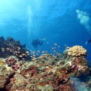 カラカラ先生ダイビング 地形