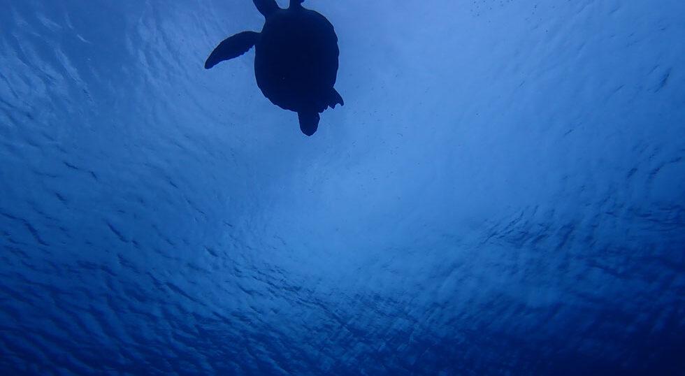カラカラ先生ダイビング