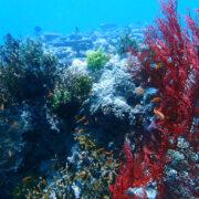 カラカラ先生ダイビングサンゴが盛りもりよ~