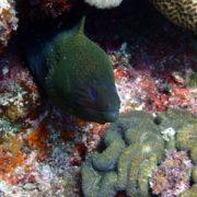 カラカラ先生ダイビング サンゴホール ドクウツボ