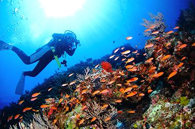 宮古島のカラフルな魚たち