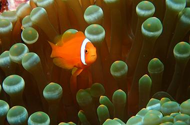 宮古島のカラフルな魚